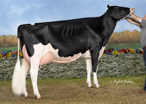 Rockymountain Goldwyn Winnie