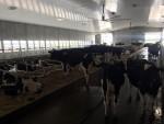 New freestall Barn