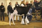BCSpring17_Holstein_1M9A8677