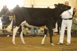 BCSpring17_Holstein_1M9A9082