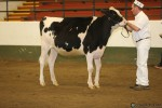 BCSpring17_Holstein_1M9A9219
