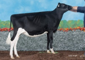 2181034 Wendon Goldwyn Prim copy