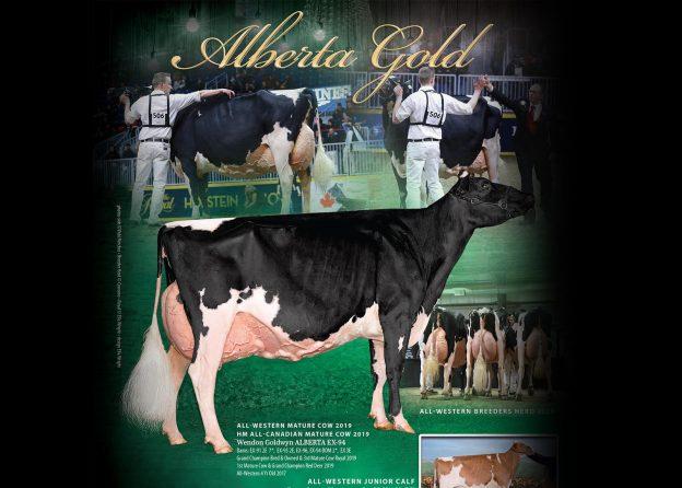 Wendon Holsteins 2019 Winter Advert